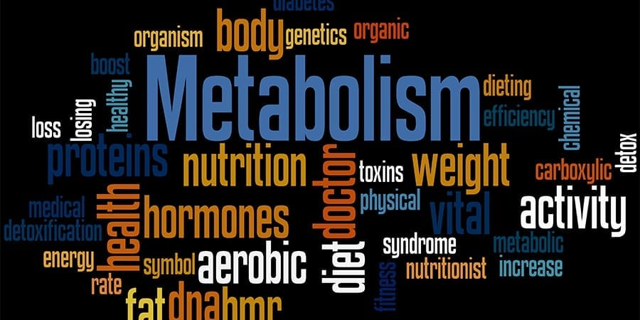 What does metabolism mean supply and demand